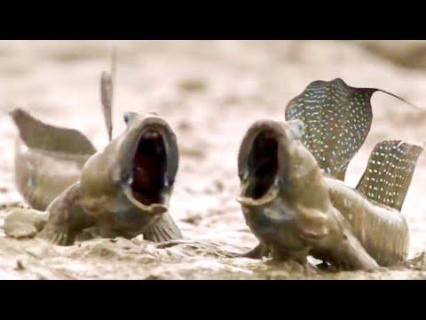 Top 5 Animal Adaptations | BBC Earth