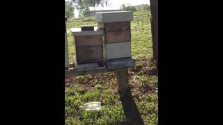 Parsons manor bee apiary