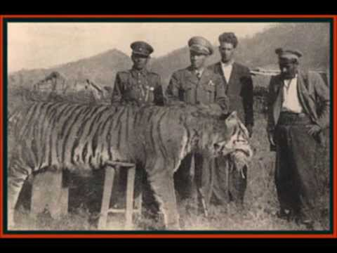 extinct - LEARN GREAT PHOTOGRAPHY TRICKS HERE http://bit.ly/168bCXl Here is my top ten recently extinct animals thanks for watching and if you like it , dont forget to...