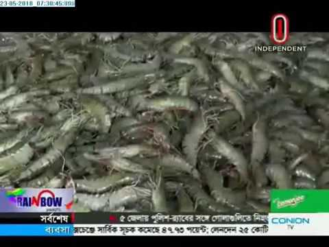 Blight breaks out in Lobster Farms of Satkhira (23-05-2018)