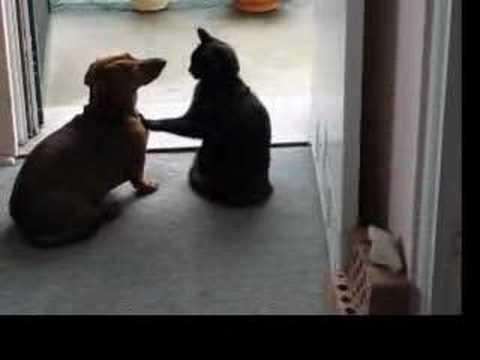 貓貓拒絕狗狗的告白