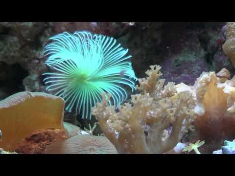 fantastico acquario marino