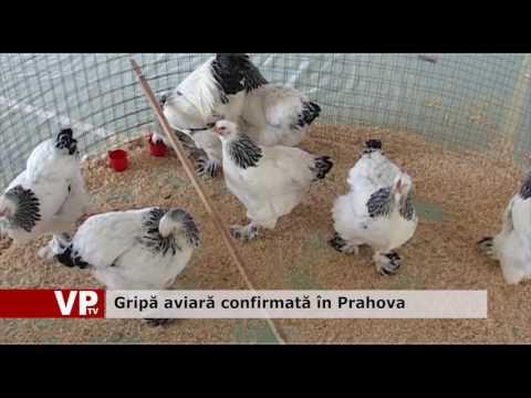 Gripă aviară confirmată în Prahova