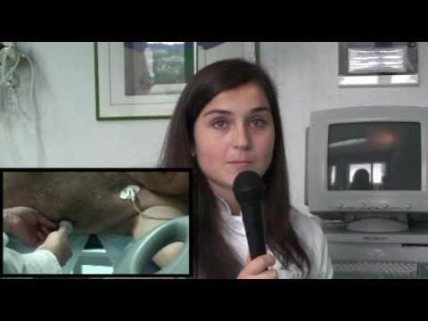 Ecocardiografia, tecniche di scansione transtoracica