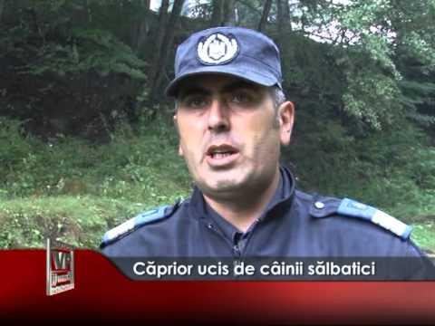 CAPRIOR UCIS DE CAINII SALBATICI