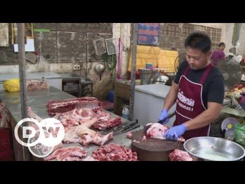 Bioanbau statt Futtermittel-Produktion in Thailand | DW Deutsch