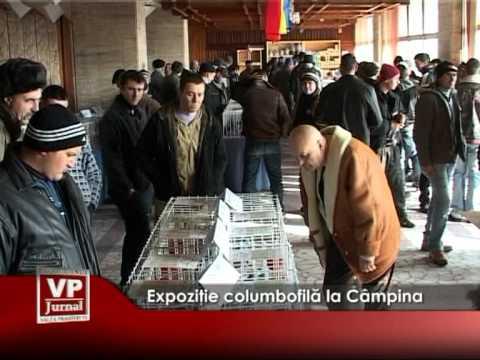 Expoziţie columbofilă la Câmpina