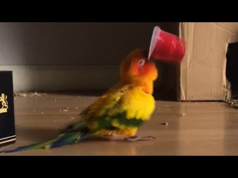 Parrot Vibrates Frantically While Holding a Plastic Cup
