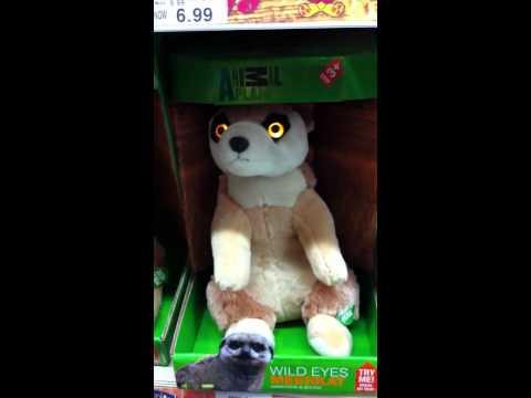 Creepy meerkat soft toy in toys'r'us