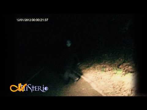 misterioso essere avvistato in mezzo ai boschi