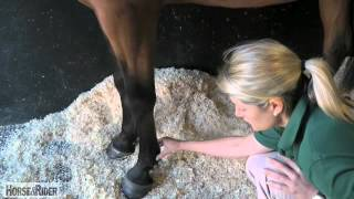 Liphook United Kingdom  City pictures : How to Take a Digital Pulse with Liphook Equine Hospital | HorseandRider UK