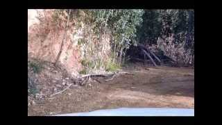 Walhalla Australia  City pictures : 4WD 4x4 Walhalla Victoria Australia D40 Navara & 79 Series Cruiser