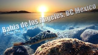Scuba diving in Bahia de los Angeles - some of the varied fauna and flora I came across, as well as topography and viz.