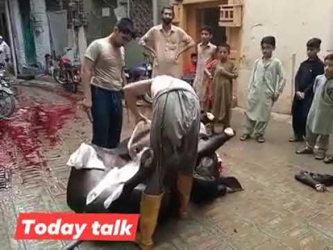 Professional Pakistan Butcher