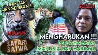 Video Terharu! Mulan & Soleh, Kisah Persahabatan Harimau dan Manusia Dari Indonesia - SAFARI SATWA (25/1) MP3, 3GP, MP4, WEBM, AVI, FLV Mei 2019