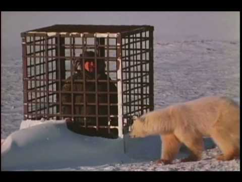 Mutual Of Omaha's Wild Kingdom - Problem Bears of the North