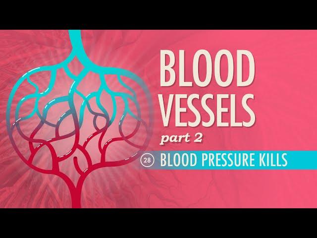 Blood Vessels Part 2 Crash Course A P 28 | BigMp3Site.com