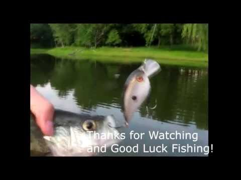fish-in-the-pond-dating-service-porn-long-video-free