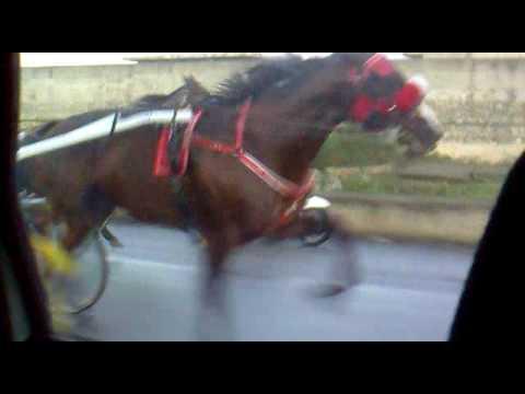corse cavalli dream air colpisce ancora