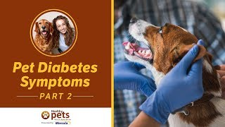 Pet Diabetes Symptoms (Part 2 of 2)