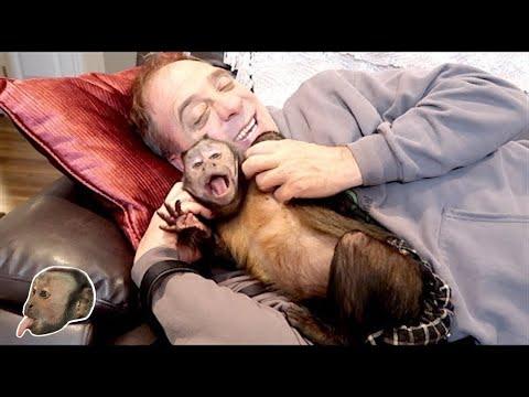 Capuchin Monkey & His Pet Human!