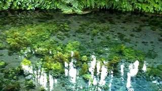 Minamiaso-mura Japan  city pictures gallery : Shirakawa Fountainhead in Minami Aso