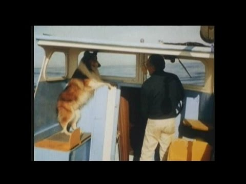 """Lassie - Episodes #494-495 - """"The Tempest"""" - Season 15, Ep. 19-20 - 02/09-16/1969"""