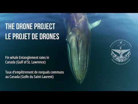 The Drone Project - Fin whale entanglement rates in Canada (Gulf of St. Lawrence) © MICS Canada