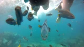 [GoPro] Snorkeling at Batu Malang - Pulau Tioman - YouTube