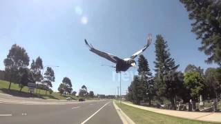 Shellharbour Australia  City pictures : Cycling during Magpie season Shellharbour Australia