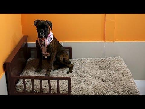 Ντουμπάι: Κέντρο αναψυχής για σκύλους