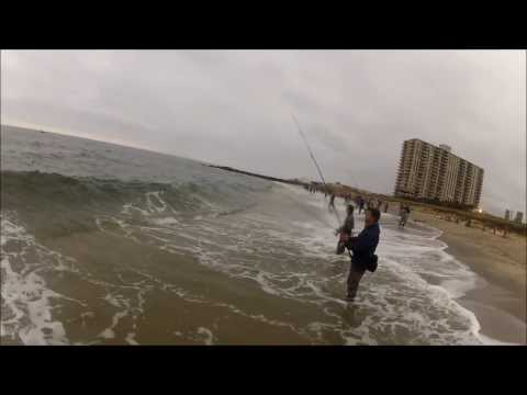 Striped Bass and Bluefish Blitizing on Peanut Bunker