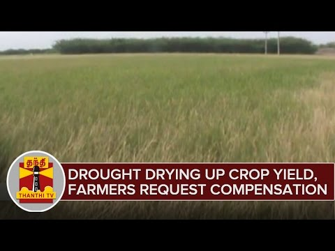 Droughts-Drying-Up-Crop-Yield-in-Sivagangai-Farmers-Request-Compensation-05-03-2016