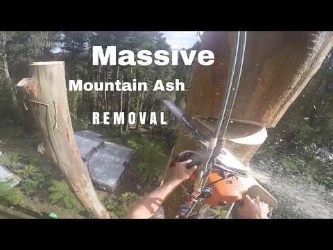 Crazy Tree Removal