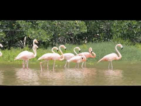 Waterways Episode 271 - Everglades Wading Birds & Benthic Studies