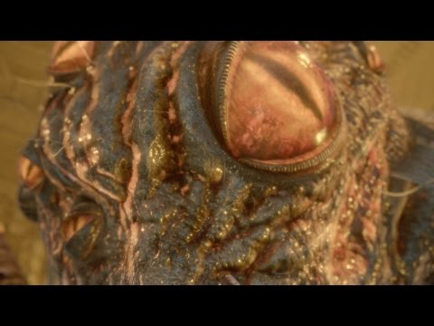 Nioh - Hundred Eyes - NO DAMAGE (видео)