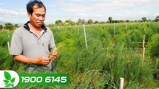 Nông nghiệp | Kỳ vọng 16 giống cây trồng mới được chính thức công nhận trong năm 2019