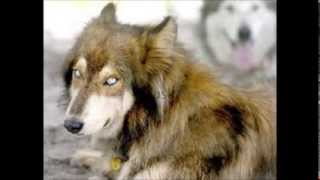 Dog Mixed Breeds