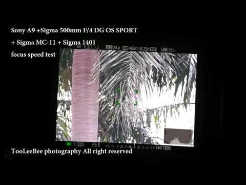 Sony A9 +Sigma 500mm F/4 DG OS SPORT  + Sigma MC-11 + Sigma 1401 focus speed test