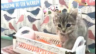 LIVE: Adoptable Kitten Shower    The Dodo + Meow for Now by The Dodo