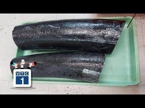 TPHCM: Bắt lô ngà voi trái phép tại Tân Sơn Nhất - Thời lượng: 46 giây.