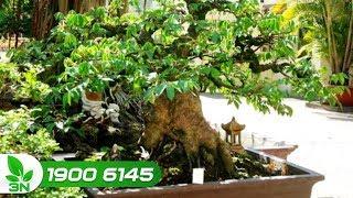 Trồng trọt | Trồng cây trong chậu với những lưu ý không thể bỏ qua