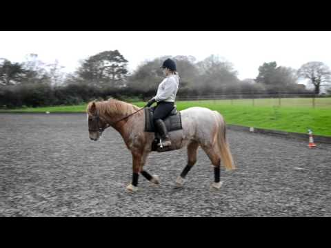Sian horse riding bracken