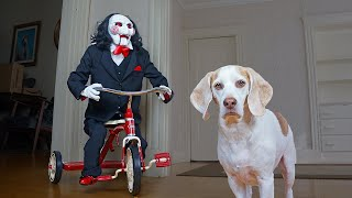 Dogs vs Jigsaw Prank: Funny Dogs Befriend Billy the Puppet From Saw Movie by Maymo