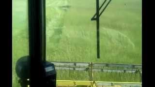 Harvesting bahia seed in North Florida: July 2014.