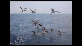 Video Zpětné zrcátko: Oceán