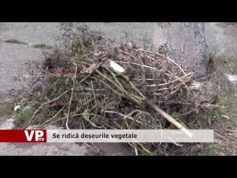 Se ridică deșeurile vegetale