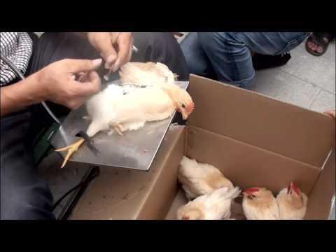 10秒快速閹雞技術...雞雞很可憐的哦