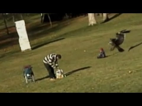 Eagle Snatches Baby in Viral Video: Caught on Tape - Is it Real or Fake?