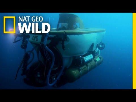 Sneak preview of fish tank kings episode 2 aquanerd for Fish tank kings